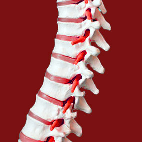 Chiropractic for Facet Syndrome