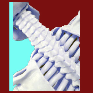 https://www.facet-joint-pain.com/facet-joint-osteophytes/